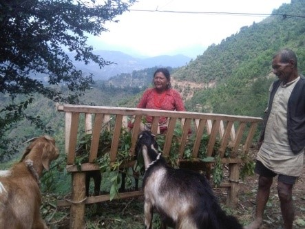 Goat feeder built by Bukhel resident