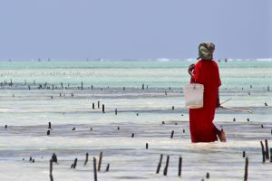 Tanzanian mama checking levels of growth in the seaweed farm. Although considered a rapid-growth crop, seaweed still takes two months to grow before it is harvested. Photo courtesy of: Alexia Hallée